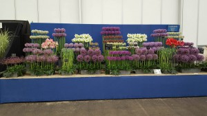 22-6-16 Stunning Alliums - BBC Good food Live
