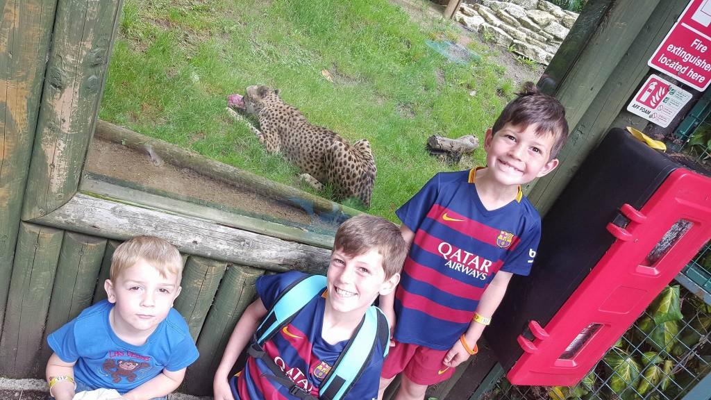 29-6-16 cheetahs at paradise park