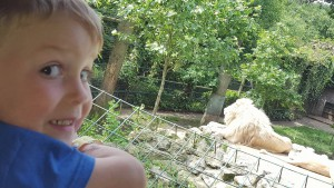 29-6-16 lions at paradise park