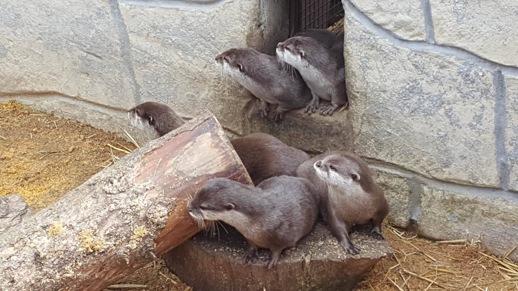 29-6-16 otters at paradise park