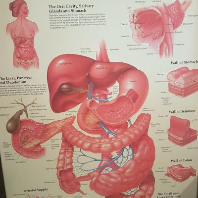 Colonic therapy Hertfordshire. How it works and how it makes you feel