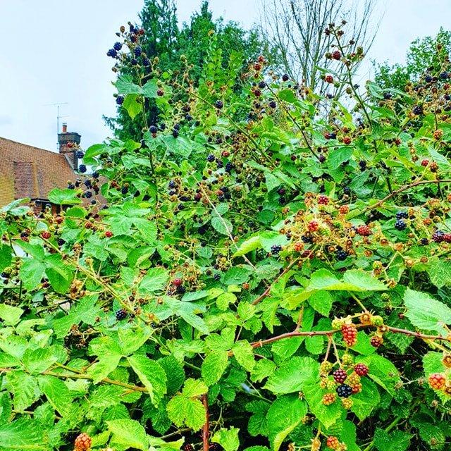 https://mintcustard.wordpress.com/2012/06/09/blackberry-gin-world-gin-day/