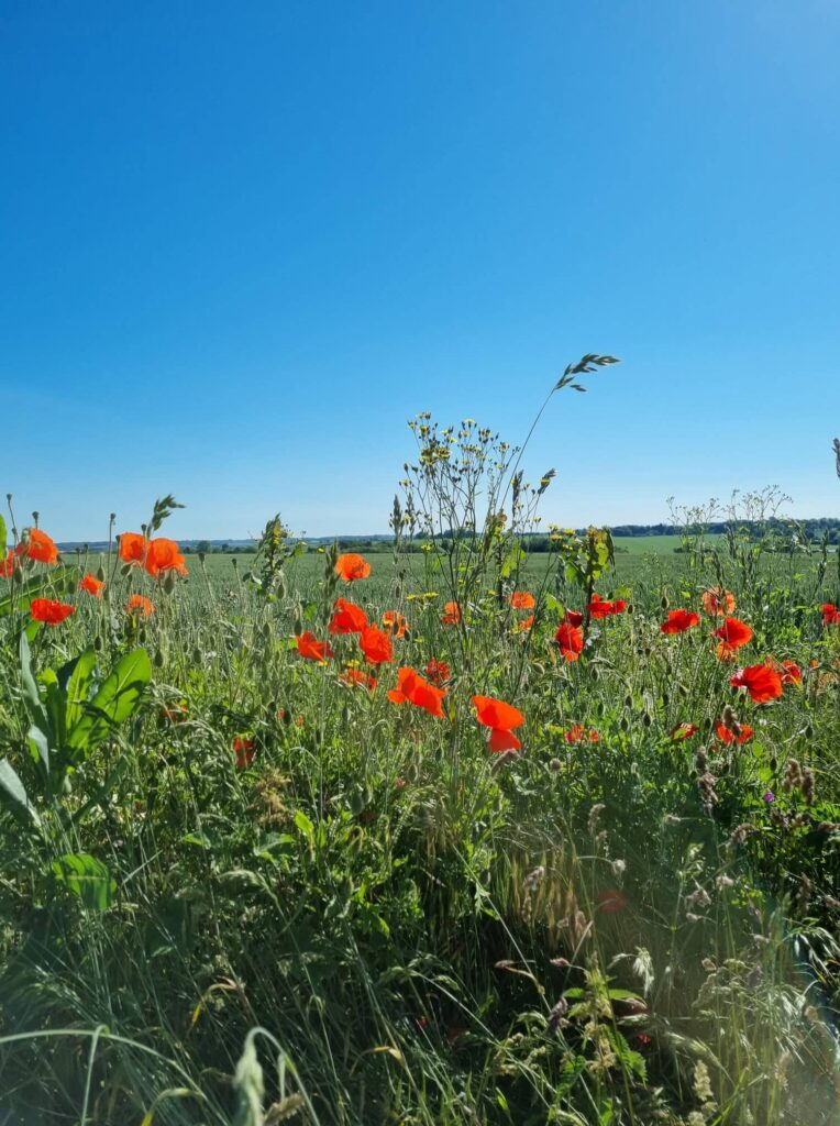 Looking to the future after I paid off debt - over a field of poppies